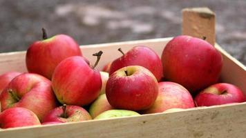 maçãs vermelhas na caixa