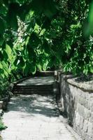Budapest street scene in Buda with steps