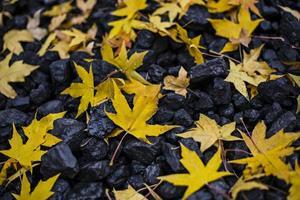 hojas de otoño y carbón