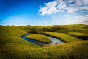 Islândia, campo de musgo com almíscar.