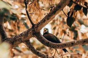 Blackbird chirping on branch