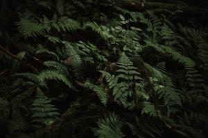 Illuminated green fern plant