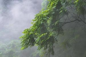 Green-leafed trees covered with fog