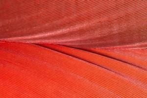 patrón de plumas de colores