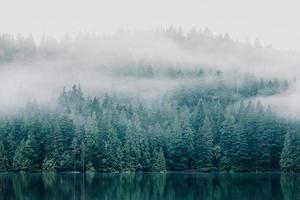 Foggy trees across lake photo