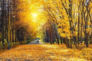 parque outono ensolarado