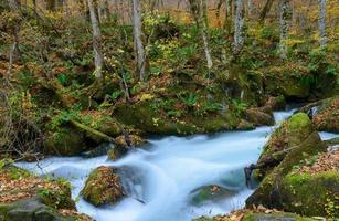 Oirase gorge in Autumn, in Aomori, Japan photo