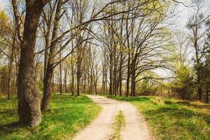temporada de primavera en el parque. hierba verde joven, árboles
