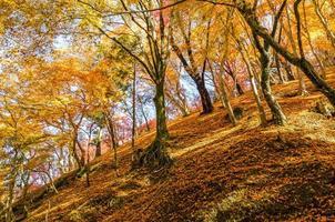 Autumn leaf on a hill