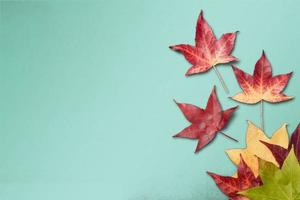 Autumn leaves on green background