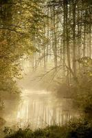 River in the misty autumn woods at dawn