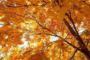 Yellow leaves.