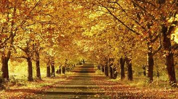 Wide shot of a pathway in the fall