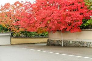 Autumn red maple leaf cover Japanese style wall