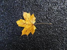 Yellow autumn leaf on black asphalt background.