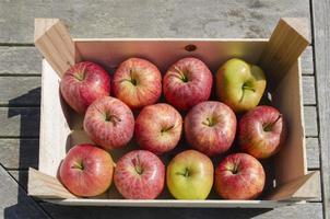 cageot de pommes photo