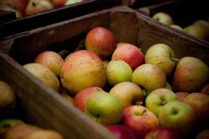 Box of apples photo