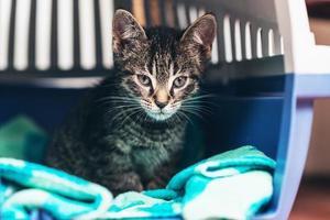 Pensive Tabby Kitten Inside Cat Carrier Box