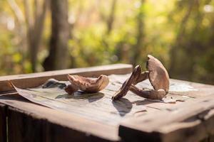 Wild Mushrooms on Vintage Crate photo