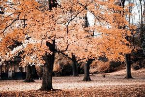 tres en el otoño foto