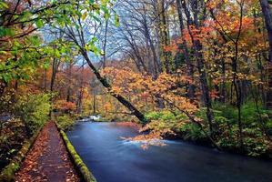 Autumn Colors of Oirase River photo