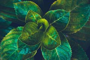 planta de hojas verdes