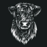 Galloway cattle cow line art