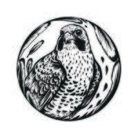 Falcon bird line art vector