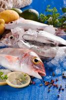 Fresh fish on a blue board photo