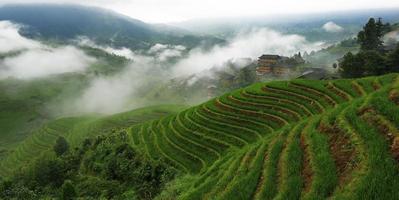 Mist terraces photo