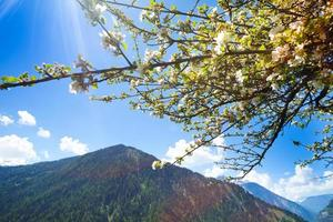Mountain in green with blooming tree bunch
