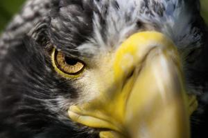 mirando ojo de águila