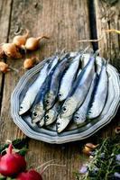 Fresh sardines photo