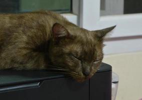 brown cat sleep on printer