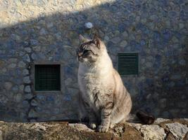 Cat in Deia/Mallorca, mediterranean village scene