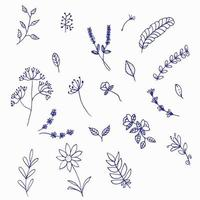 Hand Drawn Floral Elements vector