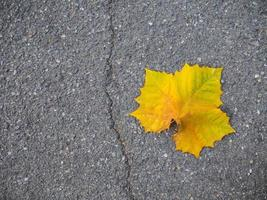 Yellow maple leaf on the ground photo