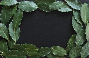 Laurel leaves on slate background