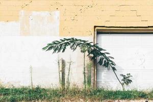 Planta de hoja verde cerca de la pared pintada de amarillo y blanco durante el día