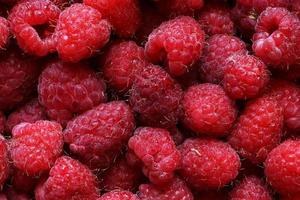 Photography of raspberries for food illustrations