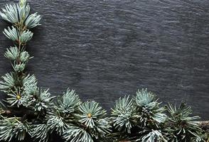 Photography of a cedar branch on slate background