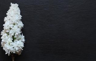 Fotografía de flor lila sobre fondo de pizarra foto
