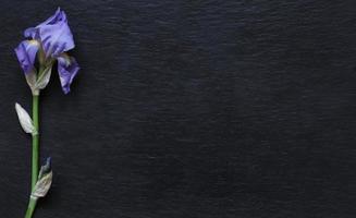 un tallo de iris sobre fondo de pizarra