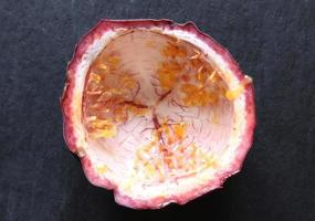 An empty passion fruit shell