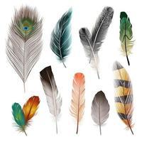 conjunto de plumas realistas