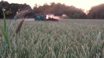 abendliche Sonnenuntergangsstrahlen, die Chemikalien sprühen, sprühen mit Traktorausrüstung video