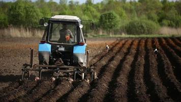 Landwirt in Traktor und Vögel, die Land für die Aussaat vorbereiten video
