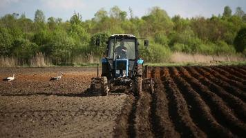 contadino in trattore e uccelli che preparano la terra per la semina