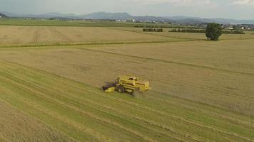AERIAL: Combine harvester working on a wheat field