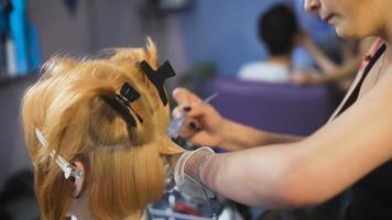 salão profissional de coloração de cabelo. um estilista experiente trabalhando com um cliente